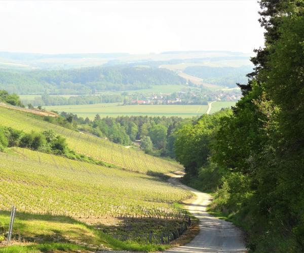 Champagne : Au pays d'Auguste Renoir