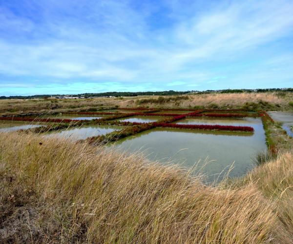 Bretagne : De la Roche-Bernard à Saint-Nazaire