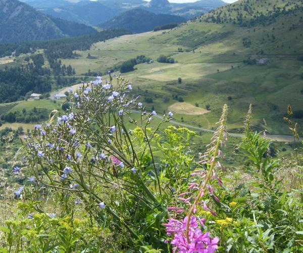 Auvergne  : Massif du Mézenc
