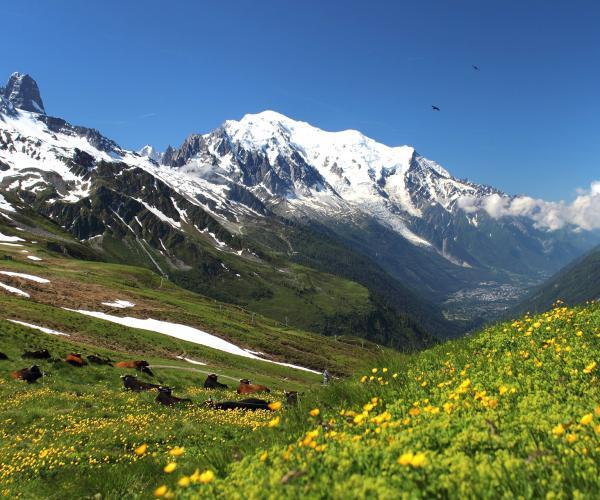 Alpes : Le Mont Blanc en liberté