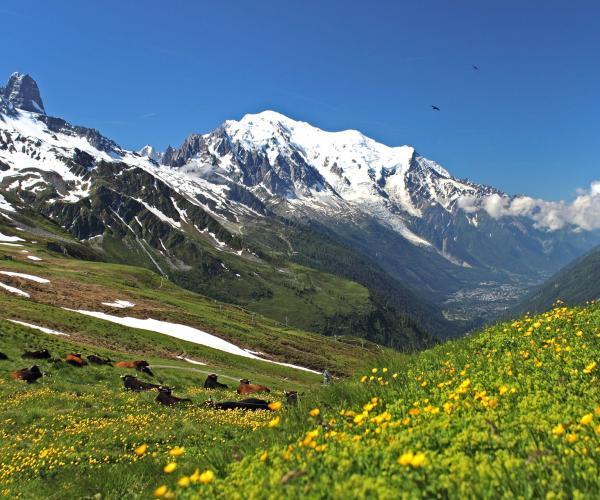 Alpes : Les Panoramas du Mont-Blanc