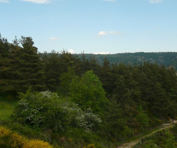 Auvergne : Vallée et Gorges de l'Allier l'intégral