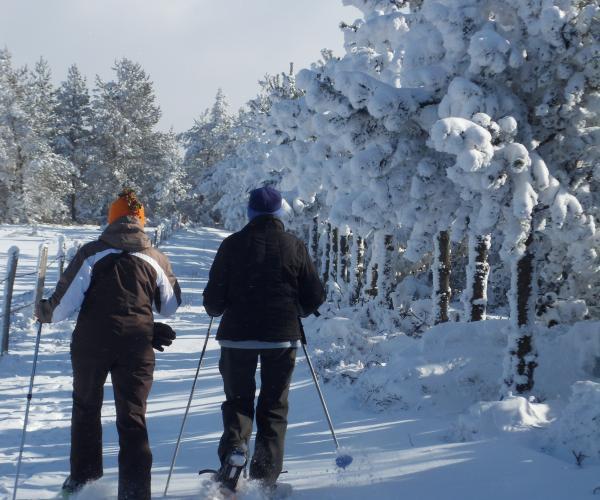 Découverte de l'Aubrac en hiver en accompagné