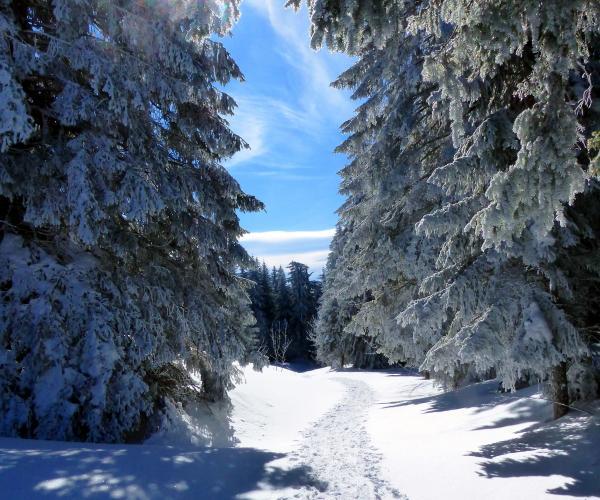 Alpes : Vercors, neiges, raquettes et bien-être