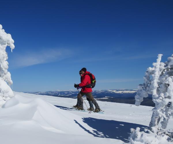 Lozère : Séjour en raquettes des Monts de Margeride aux Monts Lozère
