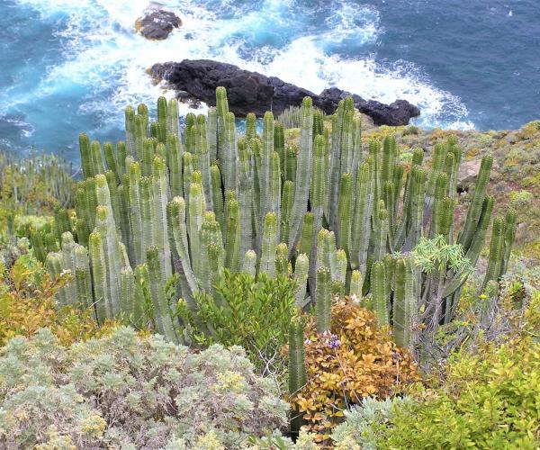 Espagne Canaries : Île de Tenerife