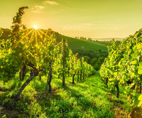 Rhône-Alpes : Tour du Beaujolais