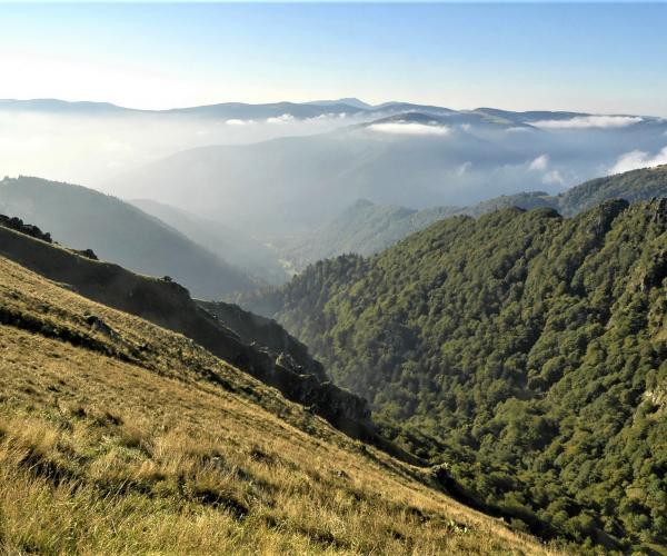 Vosges - Alsace : Vallée de Munster et Massif du Hohneck